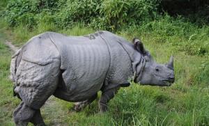 Unicorn or rhino