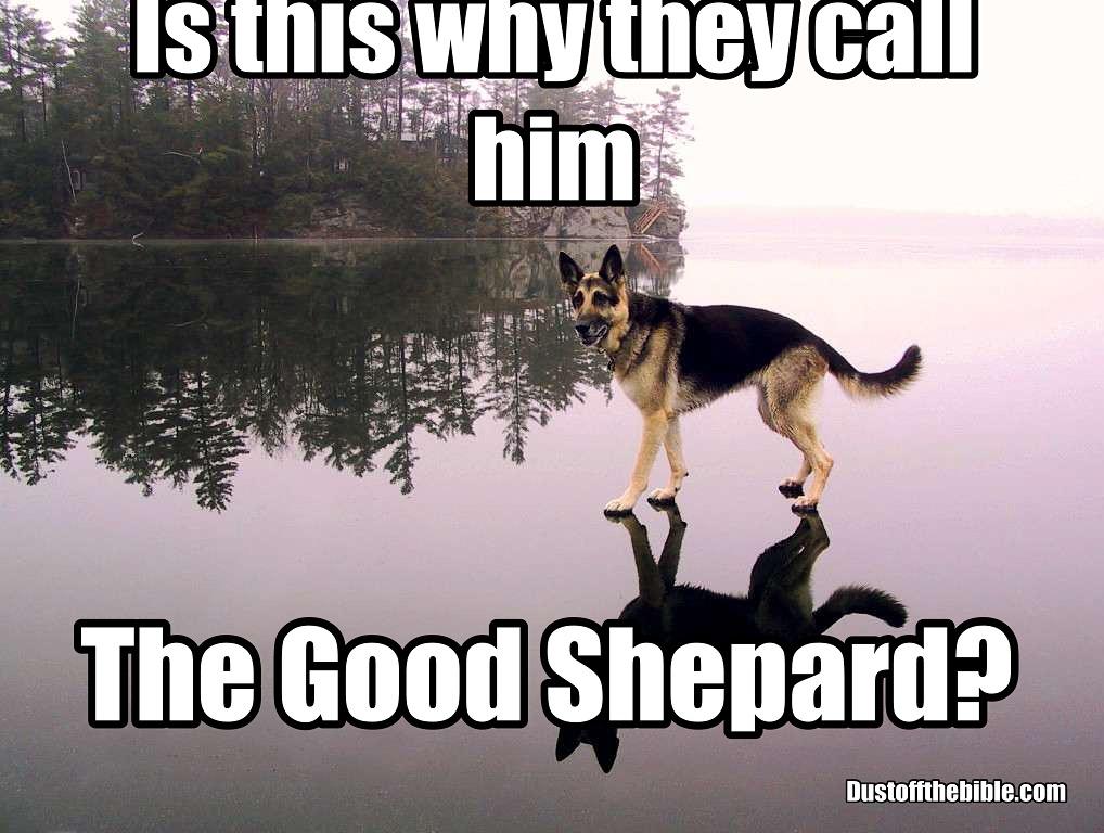Good shepard meme