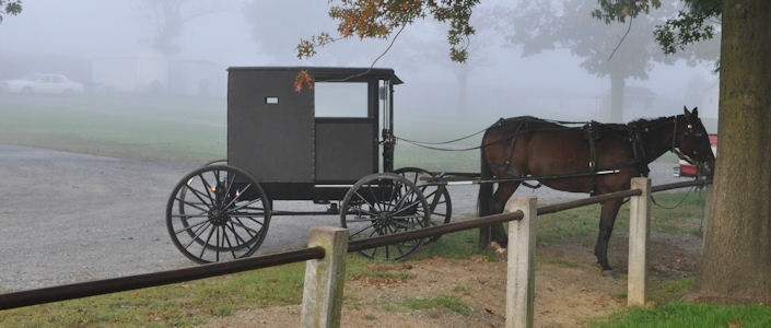mennonite buggy and horse