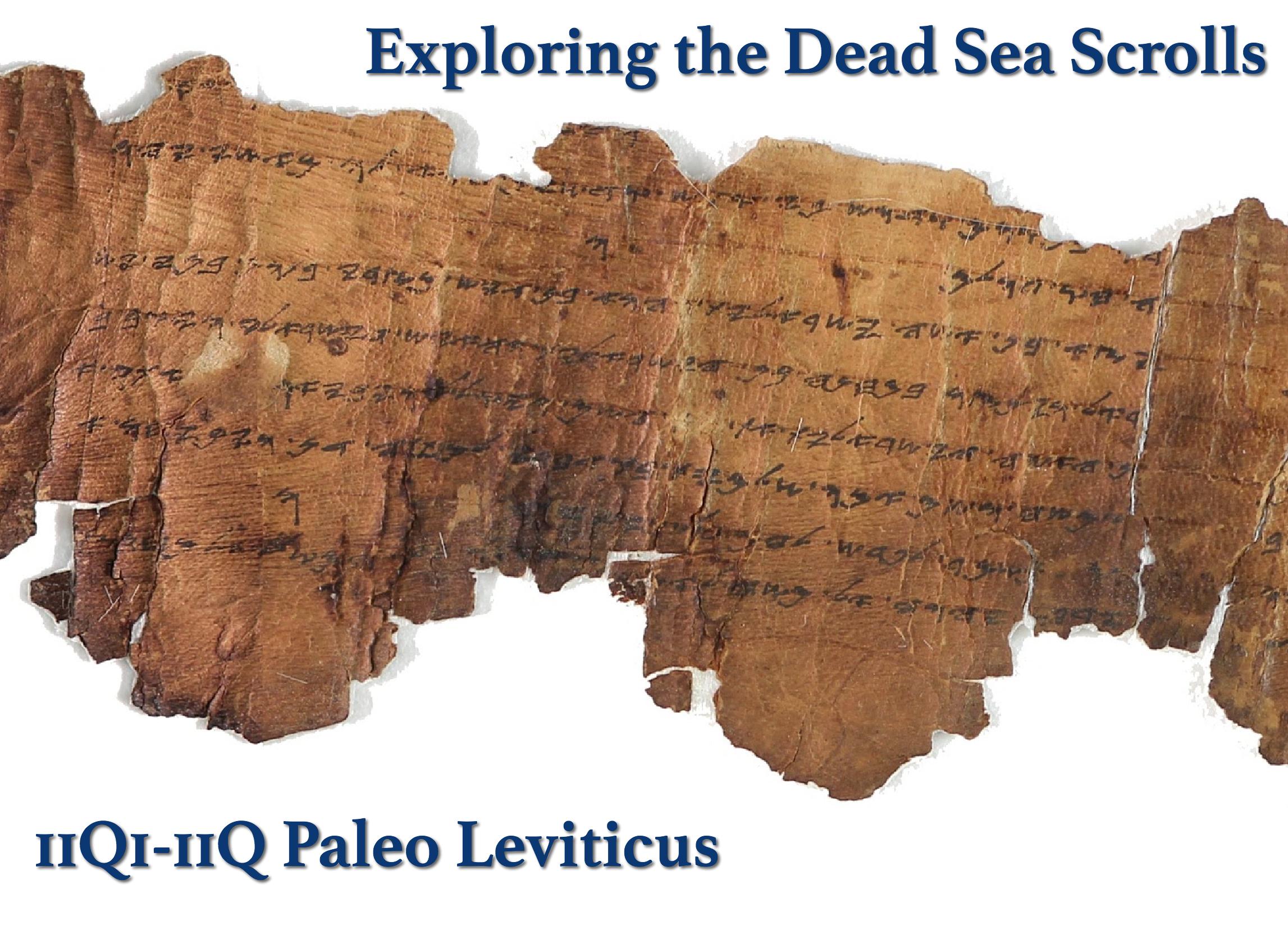 11Q1 Paleo Leviticus