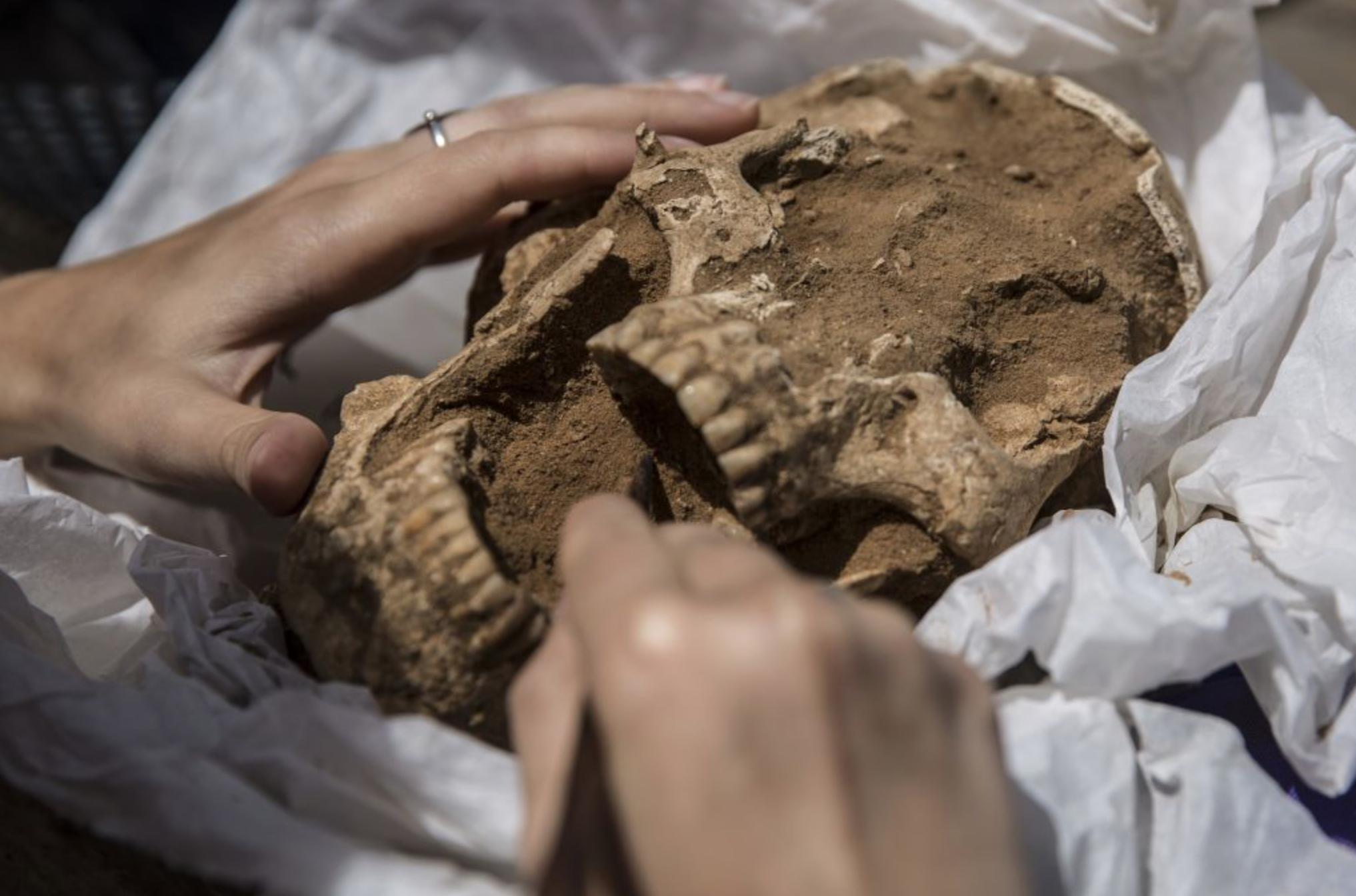 Philistine Skull discovered in Ashkelon