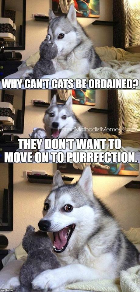 Purrfection meme