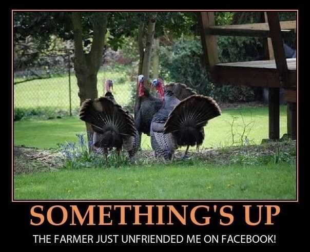 the-turkeys-are-onto-us-meme