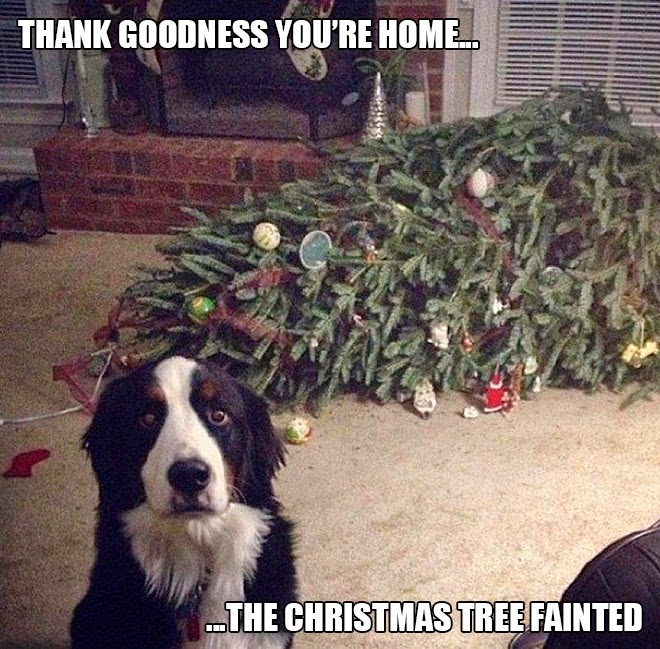 Thank goodess you're home, the tree fainted